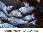 Fish In Net  Fishing Net .