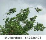 tree during heavy wind | Shutterstock . vector #642636475