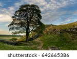Small photo of Sycamore Gap