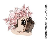 portrait of a pug dog in a rose ... | Shutterstock .eps vector #642690385