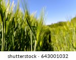 green field in agriculture with ... | Shutterstock . vector #643001032