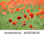 poppy field in bright day  | Shutterstock . vector #643018618