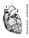 beautiful realistic heart on a... | Shutterstock . vector #643056286