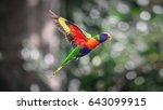 rainbow lorikeet in flight ... | Shutterstock . vector #643099915