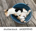 Stock photo three color cat sleeping in a blue bucket 643099945