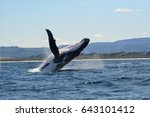 humpback whale | Shutterstock . vector #643101412
