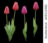 Set Red Pink Purple Tulips....