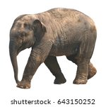 asian elephant baby on white... | Shutterstock . vector #643150252