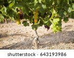 view of a vine plant with...