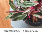beautiful plant with pink... | Shutterstock . vector #643257766