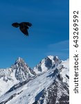 Small photo of Pyrrhocorax graculus alpine chough high mountainous black bird from crow family flying with opened wings in French Alps