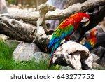 Single Parrot Bird Stand On...