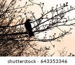 Raven In Tree During Sunset