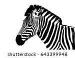 Stock photo zebra on a white background 643399948