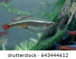 aquarium fish in china | Shutterstock . vector #643444612