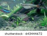 aquarium fish in china | Shutterstock . vector #643444672