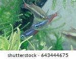 aquarium fish in china | Shutterstock . vector #643444675