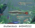 aquarium fish in china | Shutterstock . vector #643445212