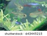 aquarium fish in china | Shutterstock . vector #643445215