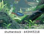 aquarium fish in china | Shutterstock . vector #643445218