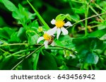 the bee is collecting nectar... | Shutterstock . vector #643456942