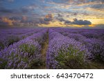 lavender field landscape | Shutterstock . vector #643470472