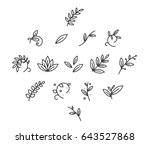 Stock vector floral decoration branch leaf plant line stroke icon pictogram symbol set collection 643527868