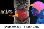 gut brain connection or gut... | Shutterstock . vector #643543282