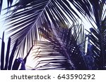 green palm leaf over sky... | Shutterstock . vector #643590292