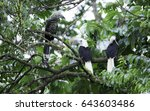 family of white crowned ... | Shutterstock . vector #643603486