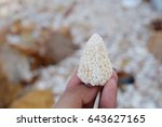 coral in hands with dead coral... | Shutterstock . vector #643627165