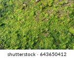 Green Moss And Lichen On Grunge ...