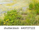 Colorful Flowering Wild Plants...