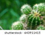 Cactus In Desert  Cactus On...