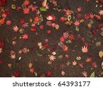 natural assortment of leaves on ... | Shutterstock . vector #64393177