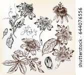 collection of hand drawn vector ... | Shutterstock .eps vector #644076556