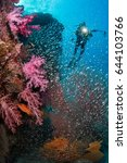 scuba divers swimming over the...   Shutterstock . vector #644103766