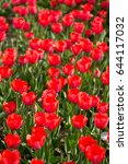 beautiful red tulips in nature | Shutterstock . vector #644117032