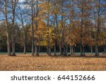 the picturesque autumn forest... | Shutterstock . vector #644152666