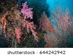 soft coral garden with...   Shutterstock . vector #644242942