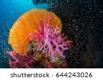 soft coral garden with...   Shutterstock . vector #644243026