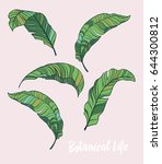 set of vector tropical leaves... | Shutterstock .eps vector #644300812