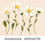 set of camomiles   Shutterstock .eps vector #644316745