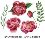 watercolor floral set with...   Shutterstock . vector #644355895