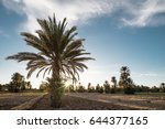 oasis in the derst of morocco... | Shutterstock . vector #644377165