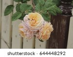 beautiful yellow  pink  and... | Shutterstock . vector #644448292