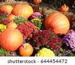 Pumpkins And Mums Autumn