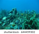 a beautiful coral reef in the... | Shutterstock . vector #644459302
