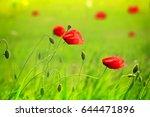 red poppy | Shutterstock . vector #644471896
