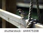sparrow bird over a wood fence... | Shutterstock . vector #644475208